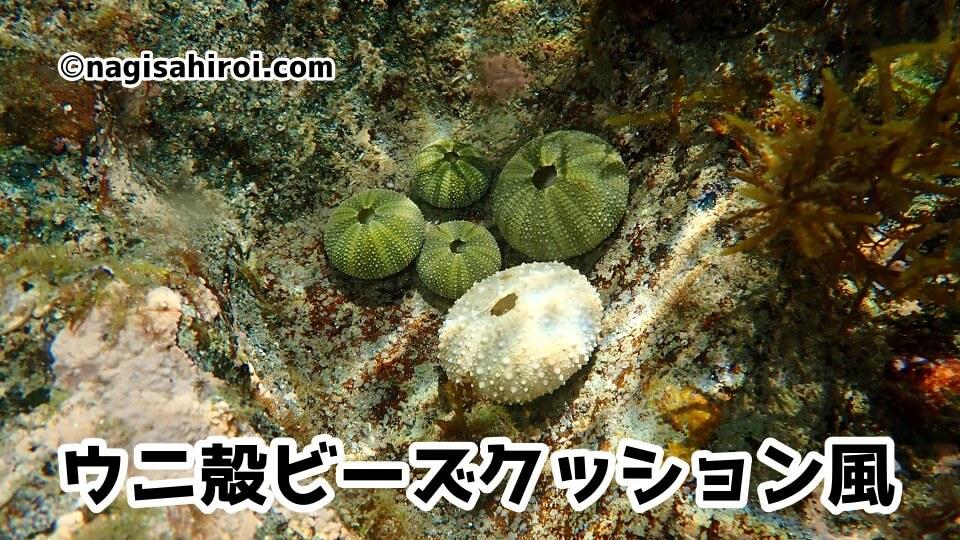 ウニ殻ビーズクッション風(奇形殻?)