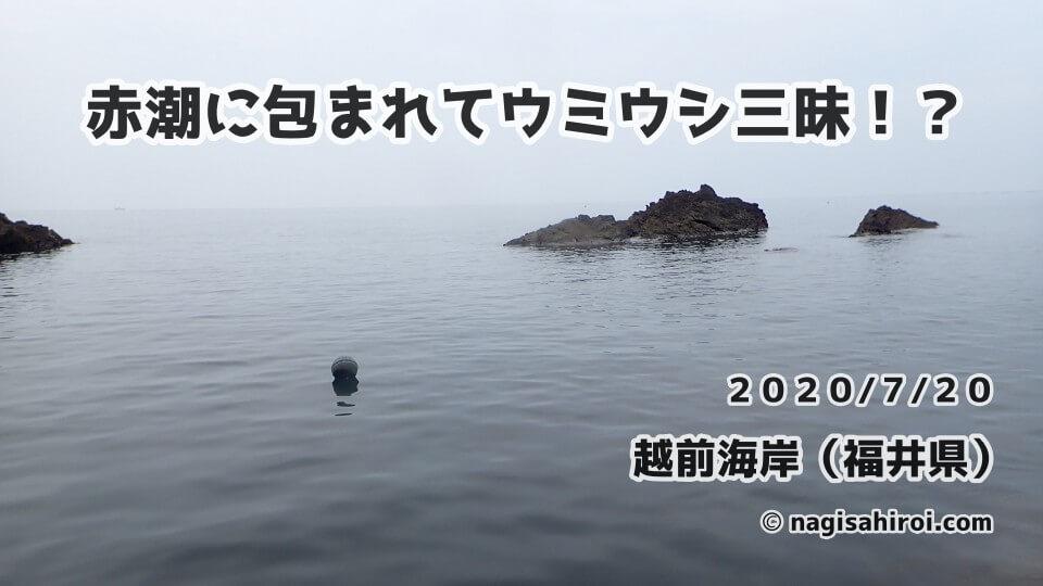 2020年7月20日(月)福井県越前海岸ダイビングブログ