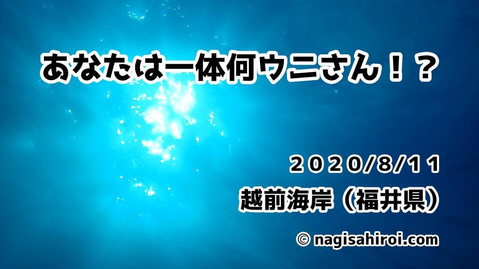 2020年8月11日(火)福井県越前海岸ダイビングブログ