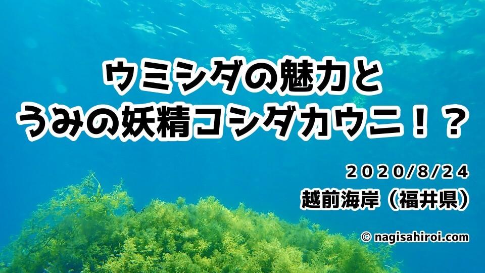 2020年8月24日(月)福井県越前海岸ダイビングブログ