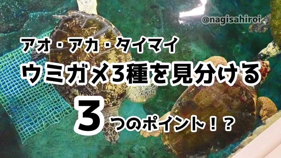 ウミガメの見分け方『アオウミガメ・アカウミガメ・タイマイ』