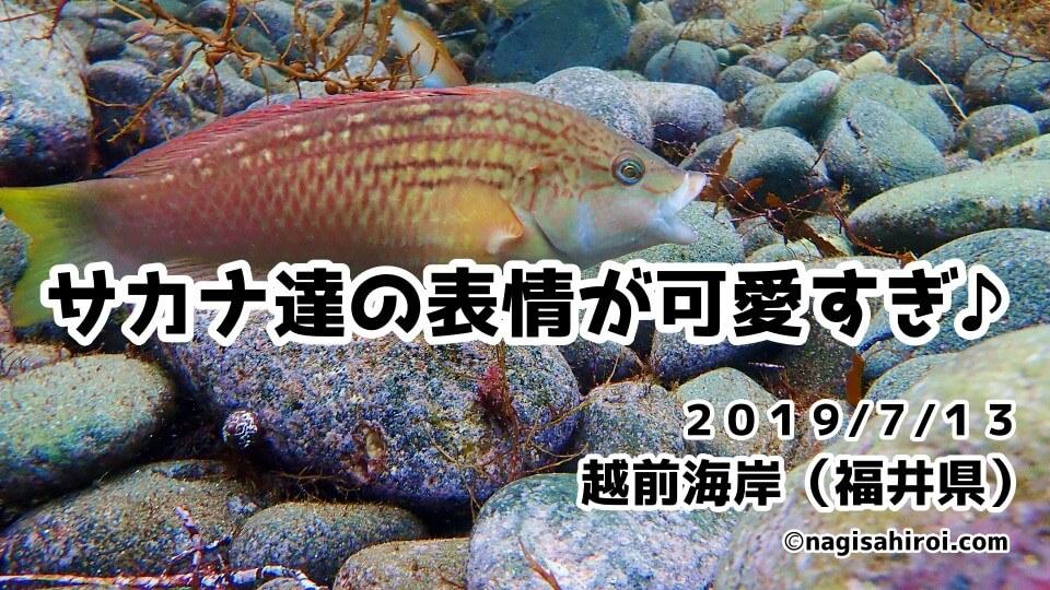 越前海岸ダイビング(福井県)2019年7月13日