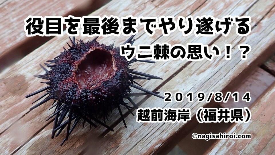 越前海岸ダイビング(福井県)2019年8月14日