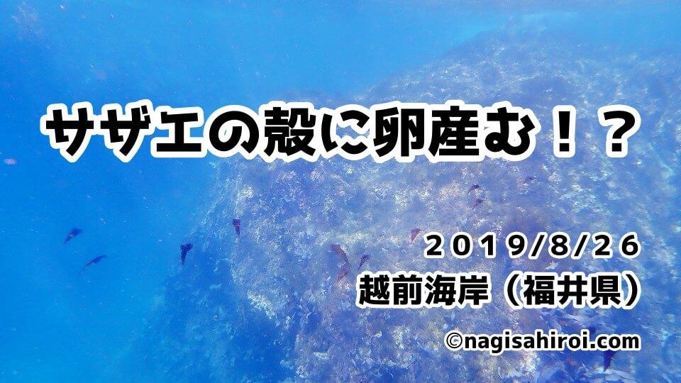 越前海岸ダイビング(福井県)2020年8月26日