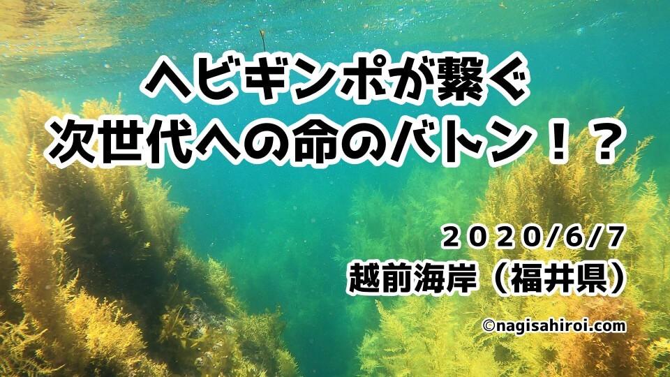 越前海岸ダイビング(福井県)2020年6月7日