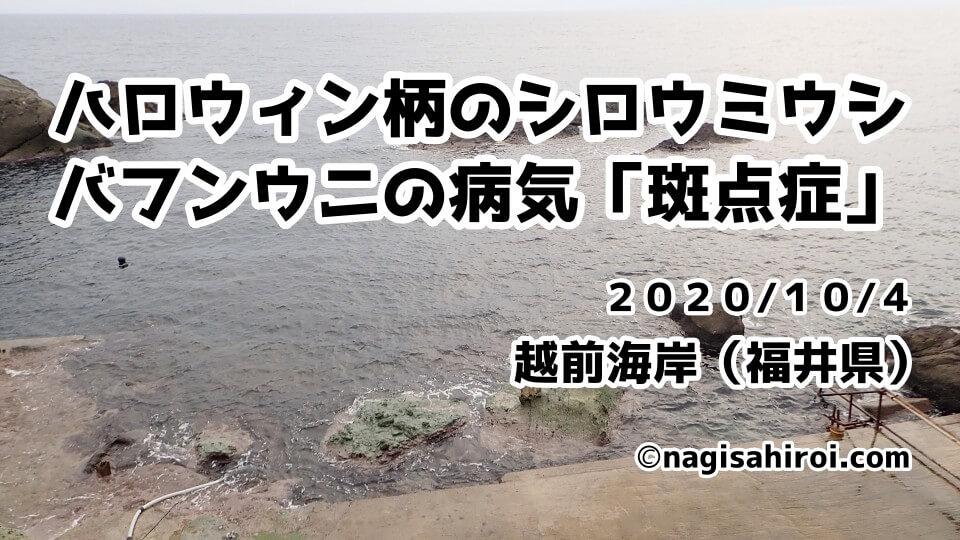 ハロウィン仕様のシロウミウシとバフンウニの病気「斑点症」越前海岸ダイビング2020年10月4日