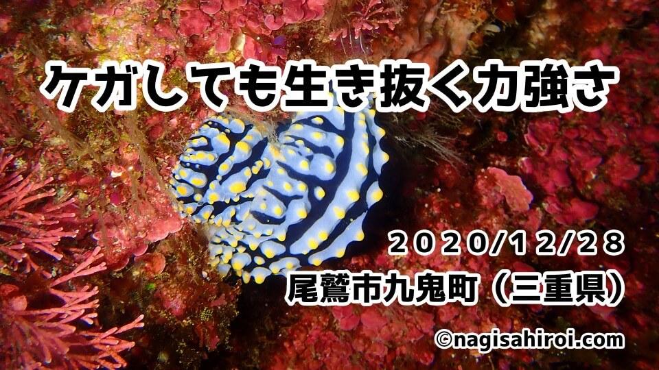 ダイビングツアー「mtk」三重県尾鷲市九鬼町2020年12月28日