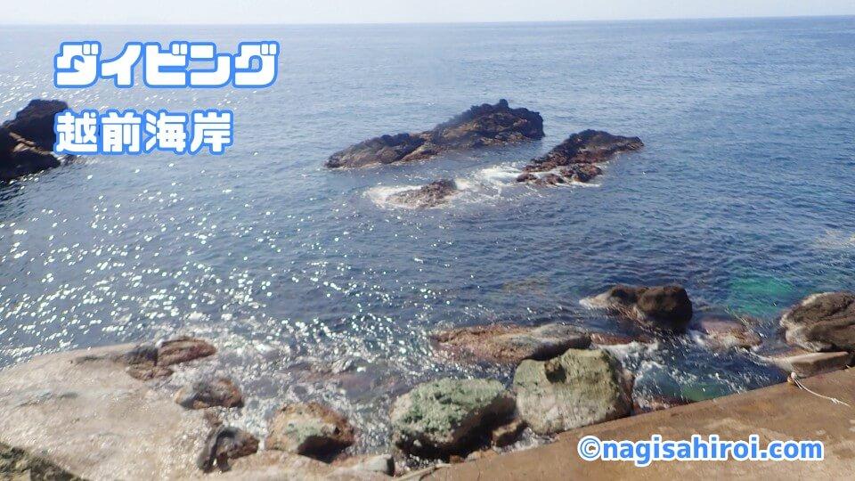 越前海岸ダイビング(福井県)2021年3月12日