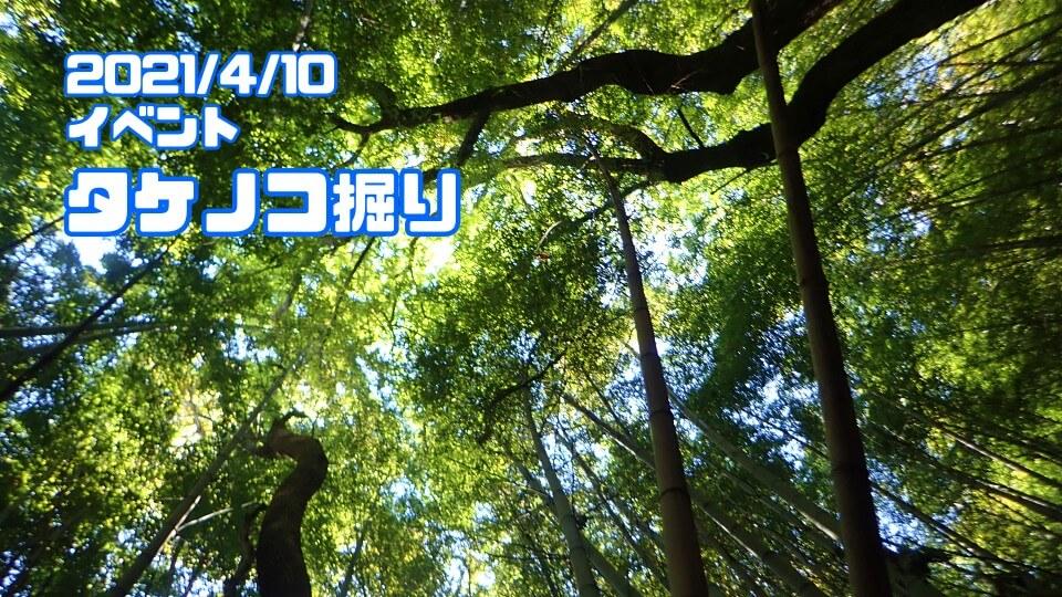 イベント企画「タケノコ掘り」