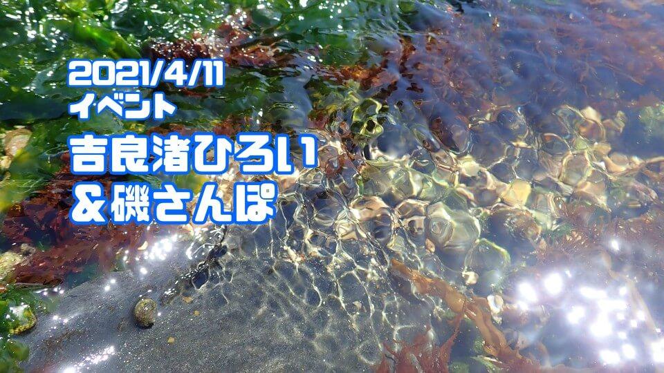 渚ひろい&磯さんぽ2021年4月11日