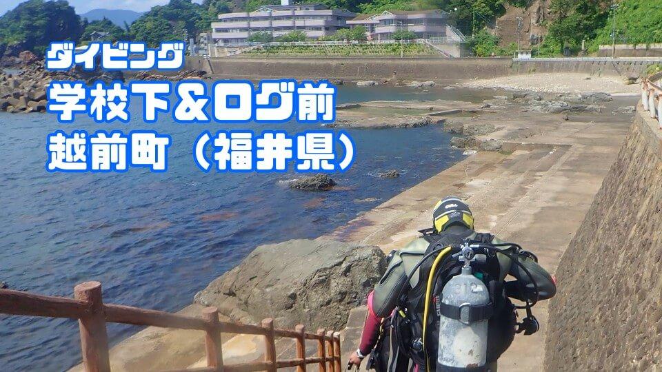 越前海岸学校下&ログ前ダイビング(福井県越前海岸)2021年6月21日